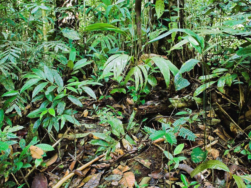 for Boden im regenwald